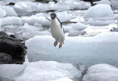 16-Interesting-Facts-about-Flightless-Bird-of-Antarctica-Penguins-2