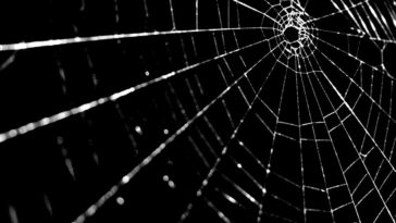 home-remedies-for-getting-rid-of-spiders